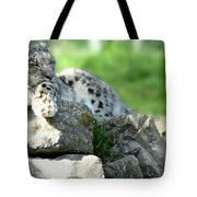 Snow Leopard At Rest. Kitty Time Tote Bag