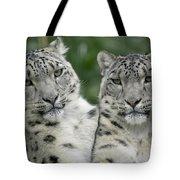 Snow Leopard Pair Sitting Tote Bag