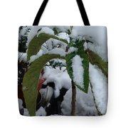 Snow Plant Tote Bag