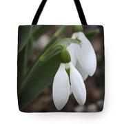 Snowdrops 2012 Tote Bag