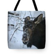 Snowy Nose Tote Bag