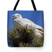 Snowy Owl High Perch Tote Bag
