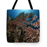 Soft Coral Reef Seascape, Indonesia Tote Bag