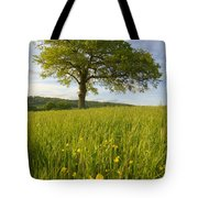 Solitary Oak Tree And Wildflowers In Tote Bag