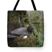 Sooty Albatross Phoebetria Fusca Tote Bag