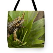 Southern Frog Newly Discovered Species Ecuador Tote Bag