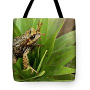 Southern Frog Pristimantis Sp, Newly Tote Bag