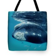 Southern Right Whale Australia Tote Bag