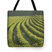 Soybean Crop Ready To Harvest Tote Bag