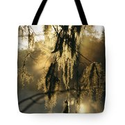 Spanish Moss Hanging From A Tree Branch Tote Bag