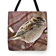 Sparrow II Tote Bag