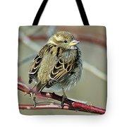 Sparrow IIi Tote Bag