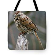 Sparrow Iv Tote Bag