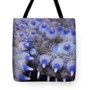 Spiny Starfish Marthasterias Glacialis Tote Bag