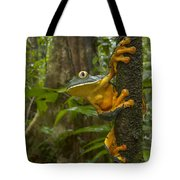 Splendid Leaf Frog  Costa Rica Tote Bag