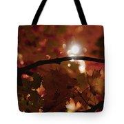 Spotlight On Fall Tote Bag