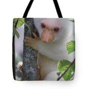 Spotted Cuscus Phalanger Maculatus Tote Bag