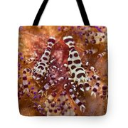 Spotted Periclimenes Colemani Shrimp Tote Bag
