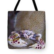 Spotted Porcelain Crab Feeding Tote Bag by Steve Jones