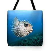 Spotted Porcupinefish Tote Bag