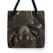 Spotted-winged Fruit Bat Balionycteris Tote Bag