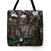 Spotted Wintergreen Plants Tote Bag