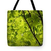 Spring - Beneath The Great Maple Tote Bag