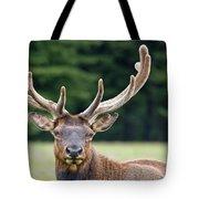 Spring Antlers Tote Bag
