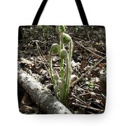 Spring Forest Fern Tote Bag