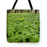 Springtime Mayapples Tote Bag by Steve Gadomski