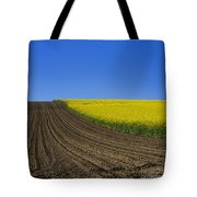 Sprouting Field Of Sunflowers And Field Of Rape. Auvergne. France. Europe Tote Bag