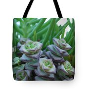 Squarely Purple Succulent Crassula Baby Necklace Tote Bag