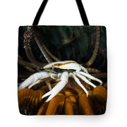 Squat Lobster Carrying Eggs, Indonesia Tote Bag