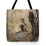 Squirrel And Cone Tote Bag
