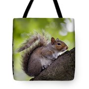 Squirrel Before Green Leaves Tote Bag