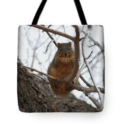 Squirrel Eating In The Frost Tote Bag