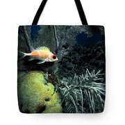 Squirrel Fish Tote Bag