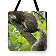 Squirrel IIi Tote Bag