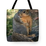 Squirrel Looking For A Hand Out Tote Bag