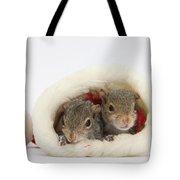 Squirrels In Santa Hat Tote Bag