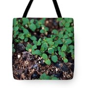 St. Johns Wort Tote Bag by Science Source