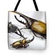 Stag Beetles Tote Bag