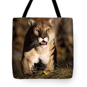 Stalking Mountain Lion Tote Bag
