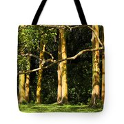 Stand Of Rainbow Eucalyptus Trees Tote Bag