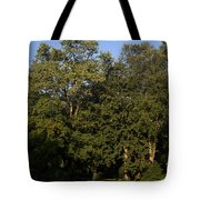Stand Of Sugar Maple Trees Tote Bag