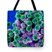 Staphylococcus Epidermidis Bacteria, Sem Tote Bag