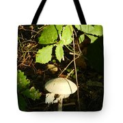 Star Of The Show Tote Bag