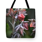 Star Succulents Tote Bag