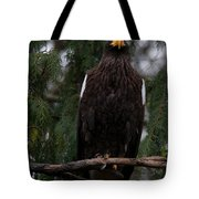 Steller's Sea Eagle Tote Bag