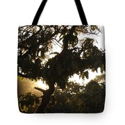 Stem And Leaves Outlined By The Shine Of Sunrays Tote Bag